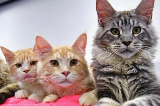 Клубы любителей кошек г москвы какие сегодня ночные клубы работают в